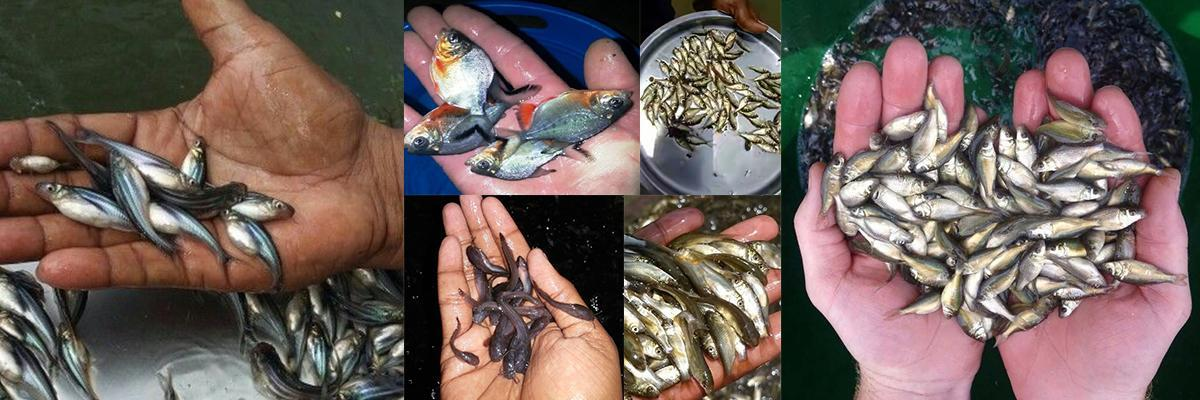 BK Fish Seed Production Center Bareilly