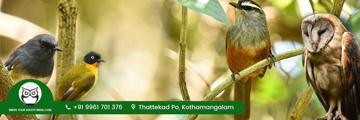 Birds Tour South India.Com Thattekad