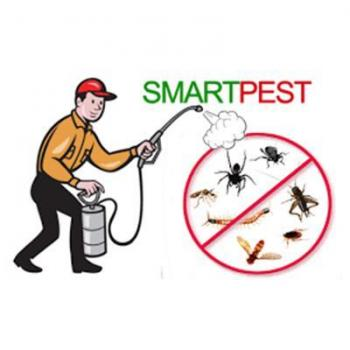 Pest Control Solutions And Services