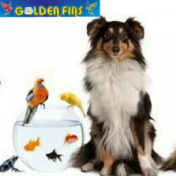 Golden Fins Aqua and Pet store in Muvattupuzha, Ernakulam