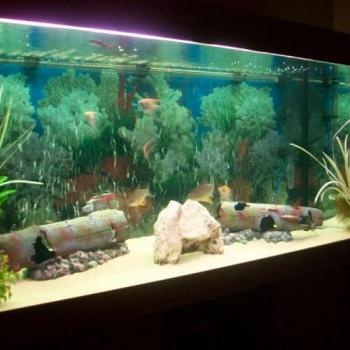 Jewel Aquarium And Pets in Kochi, Ernakulam