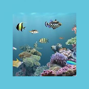 Seenu Aqua Pets