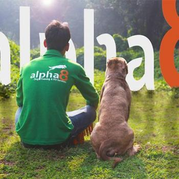 Alpha8 Dog Training & K9 Services in Kodakara, Thrissur