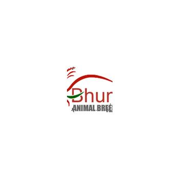 Bhumikaanimalbreeder in Bhopal