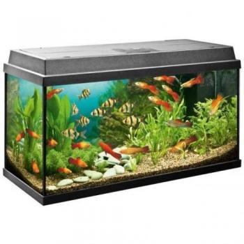 Excellent Aquarium