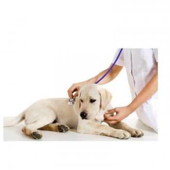 Dog Clinic in Bhopal