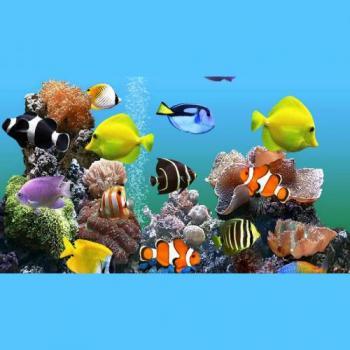 Aqua World in Pune