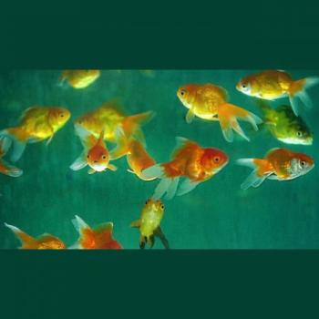 Royal Aquarium & Pet Shop in Pune