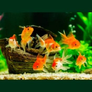 unique aquarium & Pets in Pune
