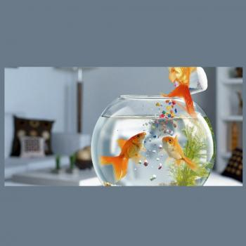 Highway Pets And Aquarium