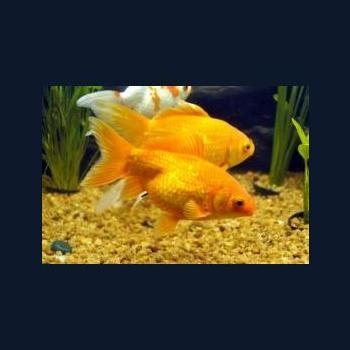 Suriya Aquarium and Pets in Mannarkkad, Palakkad