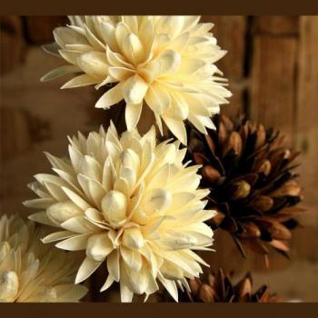 Aiswarya Flowers in Thamarassery, Kozhikode