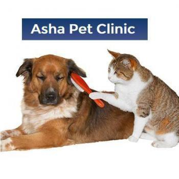 Asha Pet Clinic in Bangalore