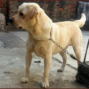 Gaya Dog Centre in Gaya