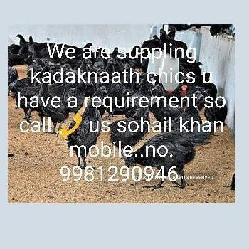 Bhopal Animal Breeder farm in Bhopal
