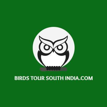 Birds Tour South India.Com in Thattekad, Ernakulam