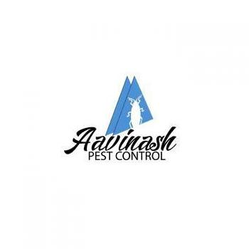 Pest control services for Termites in Chennai