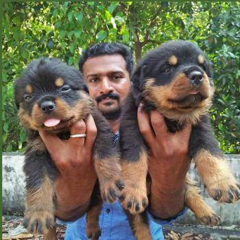Stiven Rock Kennel in Attingal, Thiruvananthapuram