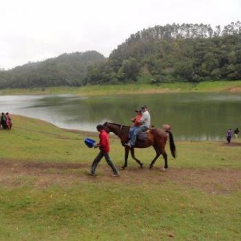 Horse ride at Munnar Rest And Lodging in Idukki